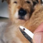 How to Get the Tick Out - Whole Dog Journal